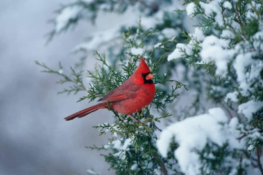 winter nature scene